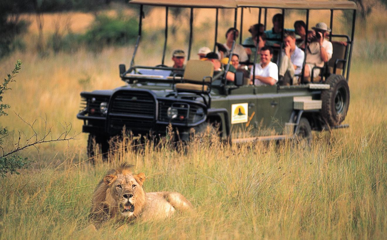 A Guide On How To Stay Healthy On A Safari Trip To South Africa